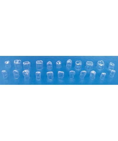 Целулоидни корони за предни зъби - 64 бр.